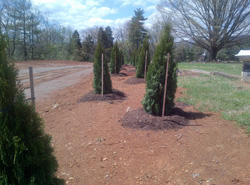 Cedar Lawn Memorial Park, Roanoke, VA - Update on Tree Planting Project