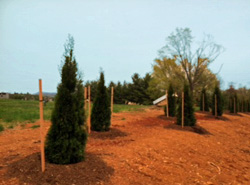 Cedar Lawn Memorial Park, Roanoke, VA Tree Planting Project